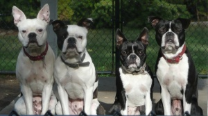 From left to right, Lilly, Buster, Sassy, Yogi